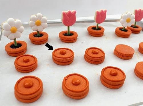 pasos a seguir formación flores macetas